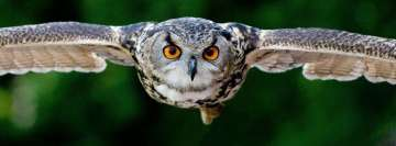 Tanning Photography of Flying Eagle Owl Facebook Wall Image