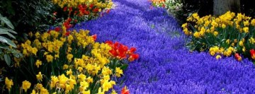 The Color of Spring Facebook Cover Photo