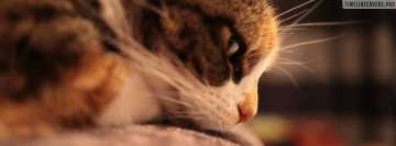 Thoughtful Cat Facebook Background TimeLine Cover