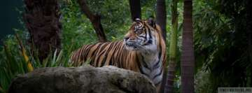 Tiger in Rainforest Fb Cover