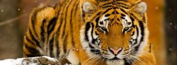 Tiger in Snow Facebook Cover Photo