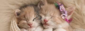 Tiny Sleeping Kittens Cat Facebook Cover-ups