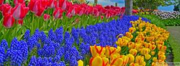 Tulips and Muscari Flowers Growing in The Park Facebook cover photo