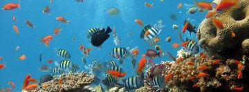 Underwater World of Fishes Facebook Cover