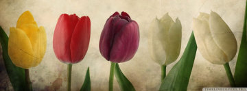 Vintage Tulips Facebook Cover Photo