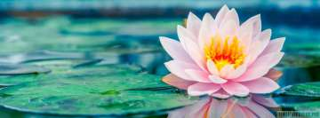 Water Lily Flower Facebook Banner