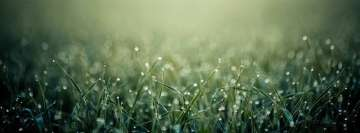 Wet Detailed Sunny Grass Facebook cover photo