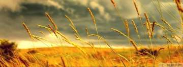 Wheat Field in Sunset Fb Cover