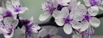 White and Purple Petal Flower Focus Facebook cover photo