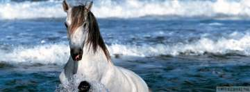White Horse Having a Bath Facebook Wall Image