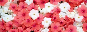 White Pink Flowers Facebook Banner