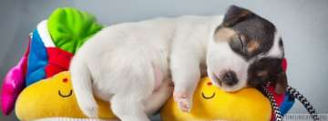White Sleeping Puppy