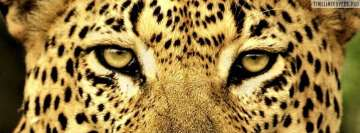 Wild Cat Leopard Facebook Wall Image
