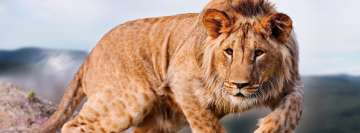 Wildlife Lion