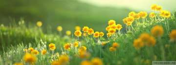 Yellow Field Flowers in Sunshine Facebook Cover-ups