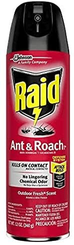 What Are The Best Ant Traps For The Kitchen? 2