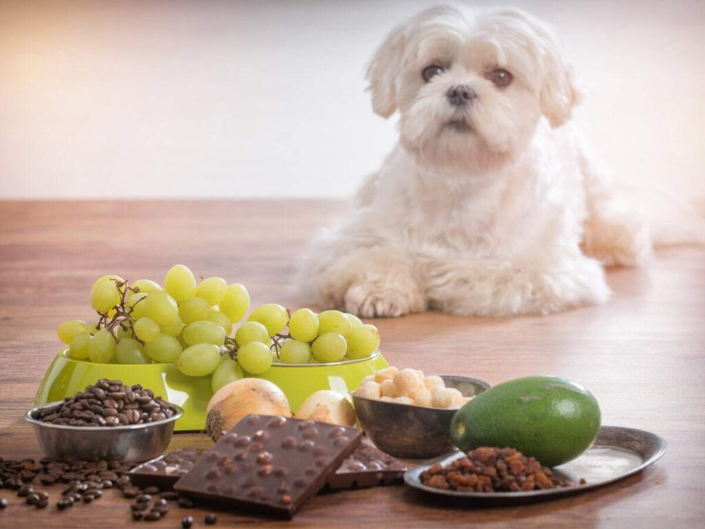 Can You Cook The Same Food For You And Your Dog? 3