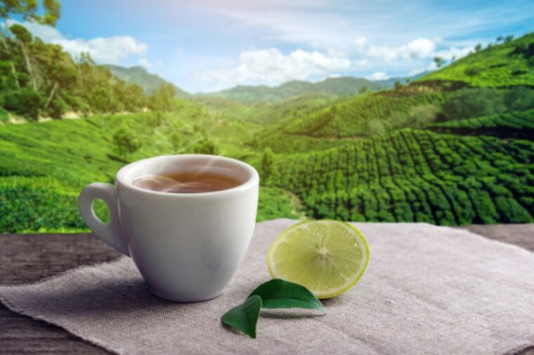 8 Good Reasons Why You Should Start Drinking Tea More Often 2