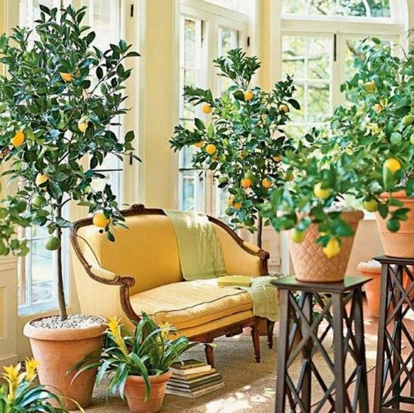 7 Reasons Why Every Kitchen Needs a Lemon Tree - 2021 Guide 5