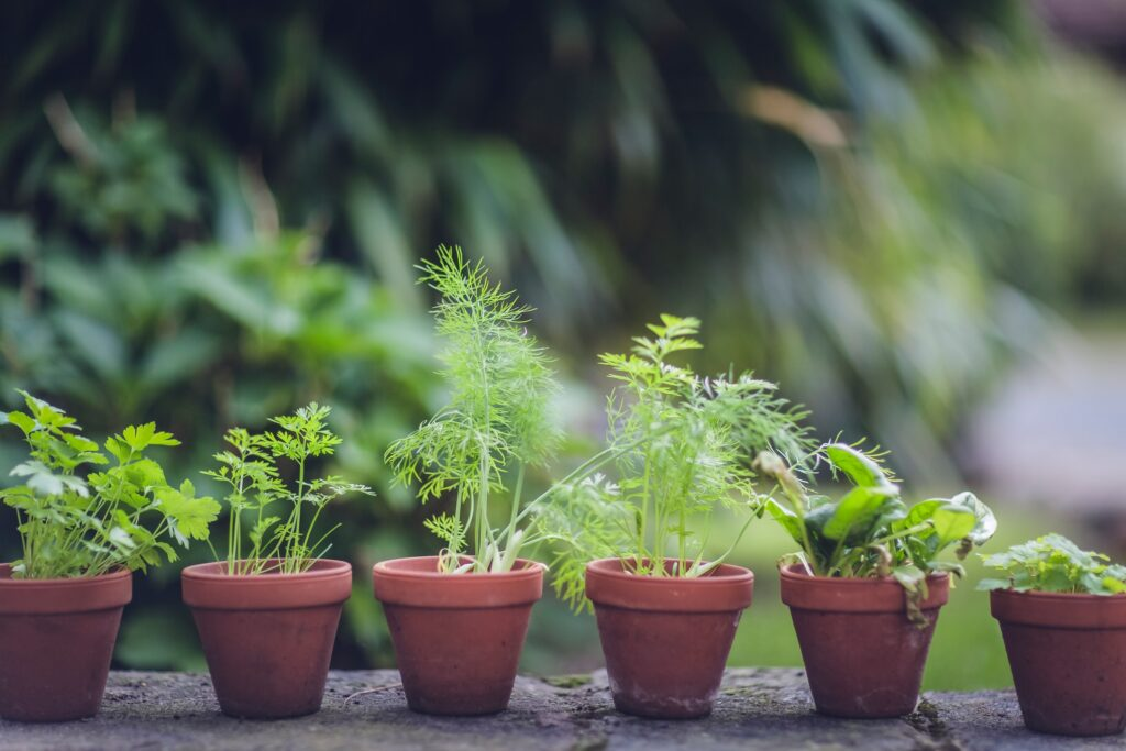 What Are The Health Benefits Of Growing Your Own Herbs 5