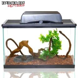 Tree Frog Setup For Sale - Underground Reptiles