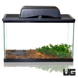 Baby Pacman Frog Setup For Sale - Underground Reptiles
