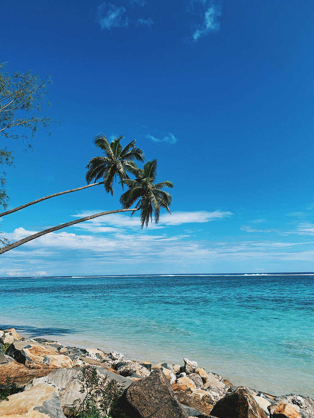 Palm trees in the Cook Islands