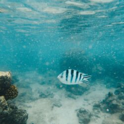 Best 3 places to do snorkeling in Rarotonga