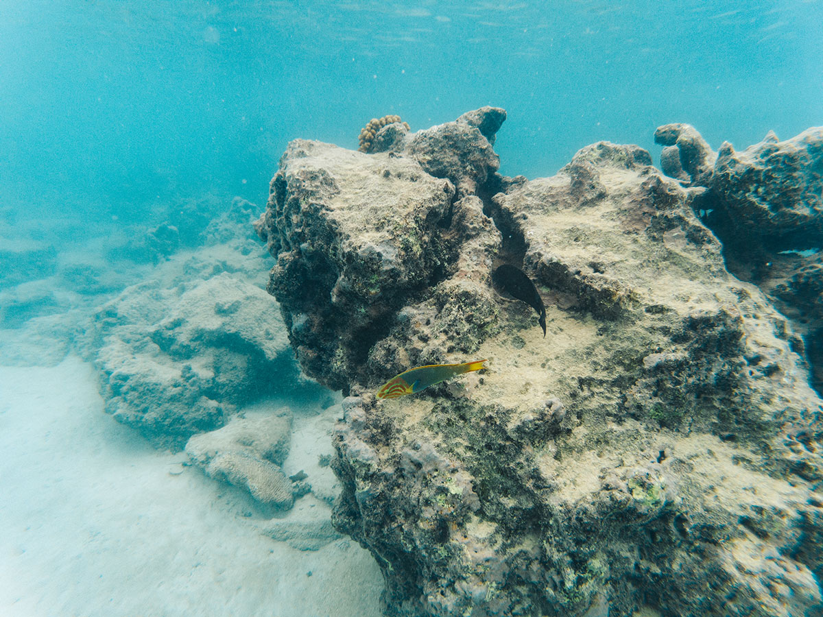 Corals and fish while doing snorkeling in Rarotonga