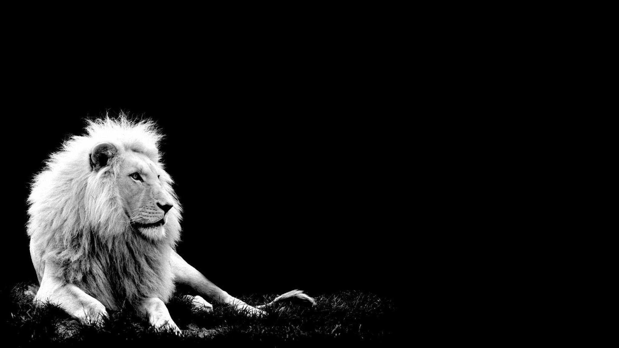Iphone Lion Wallpaper Hd 1080p Black And White