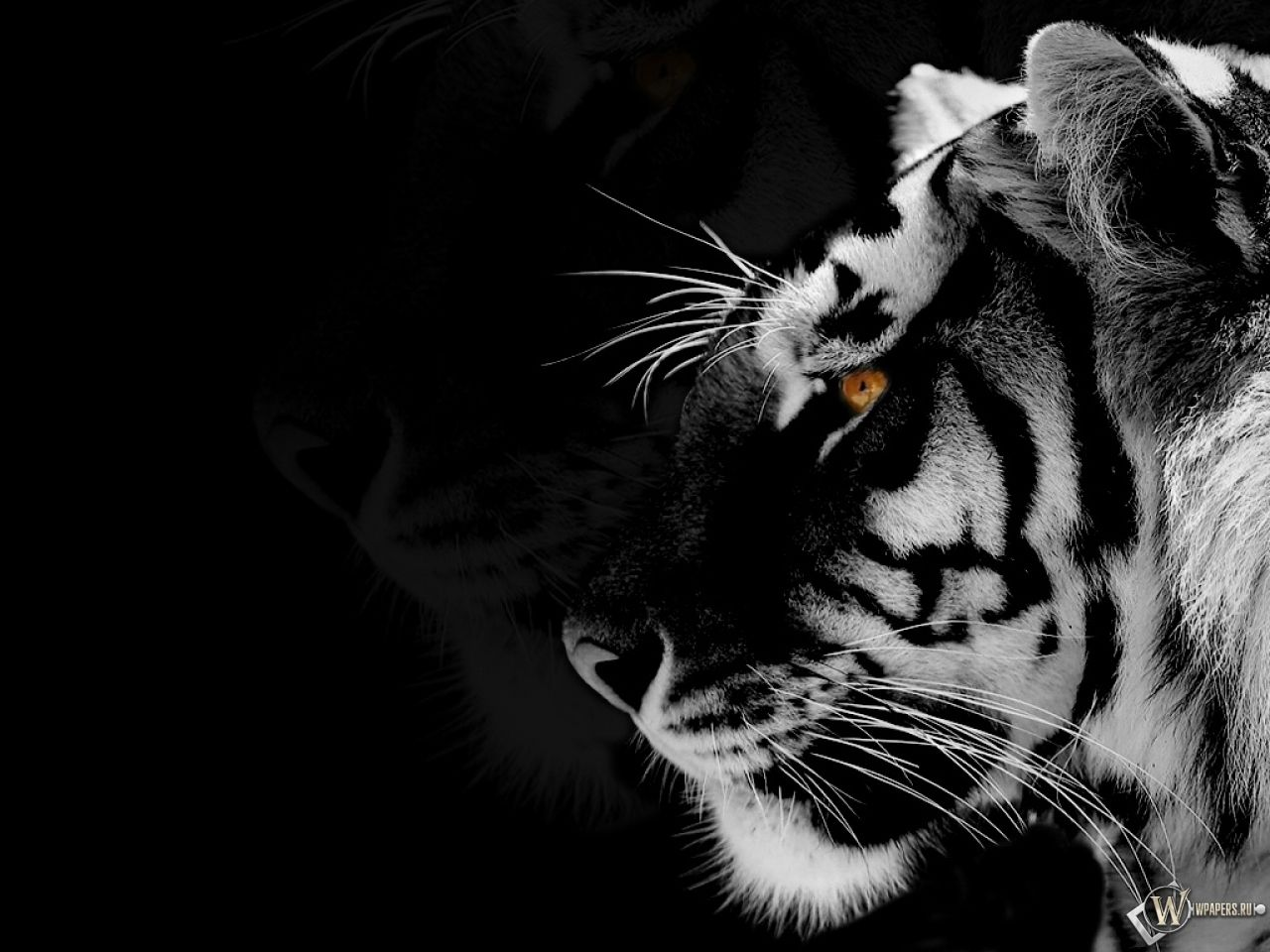 Full Hd Black And White Tiger Wallpaper