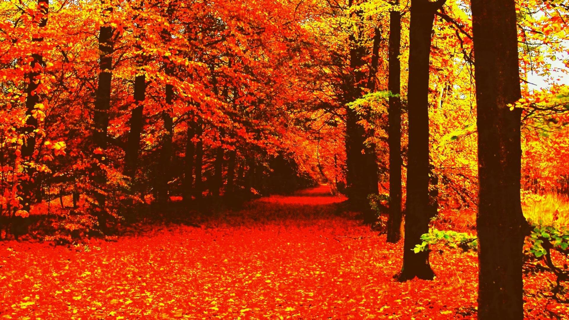 Aesthetic Fall Wallpaper Desktop