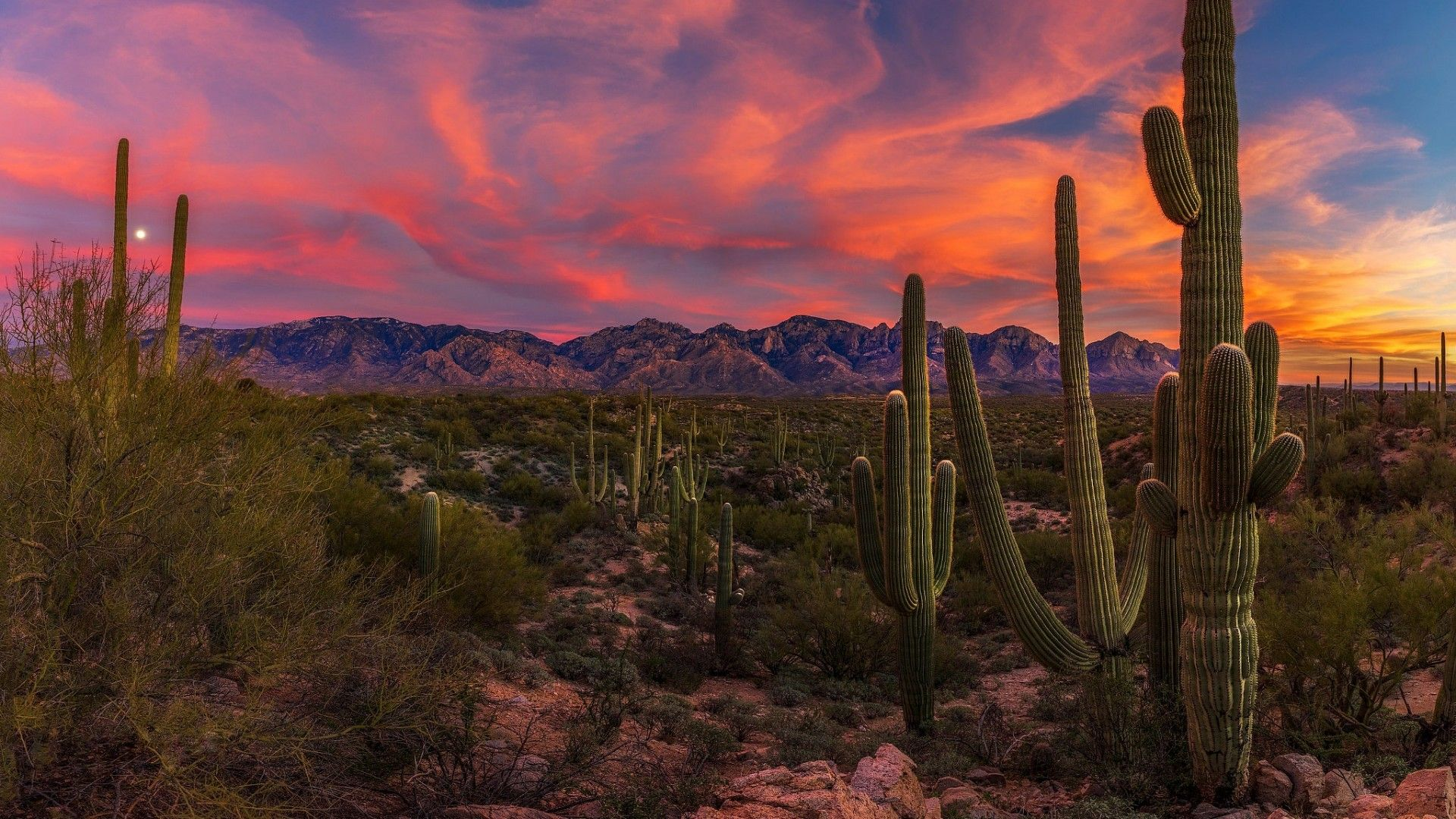 Arizona Desert Sunset Wallpaper