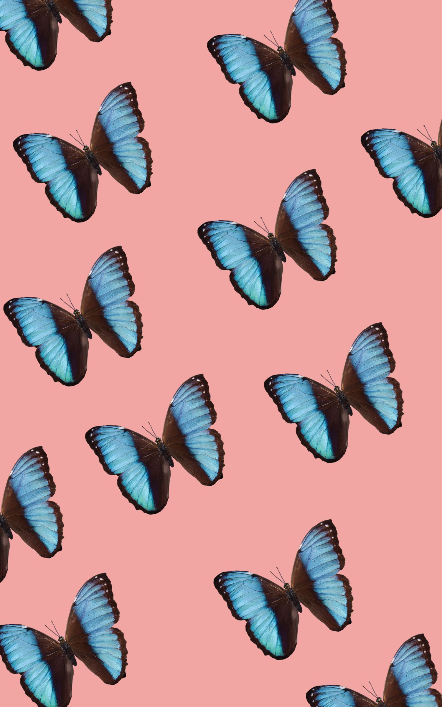 Aesthetic Blue Butterfly Wallpaper Vsco