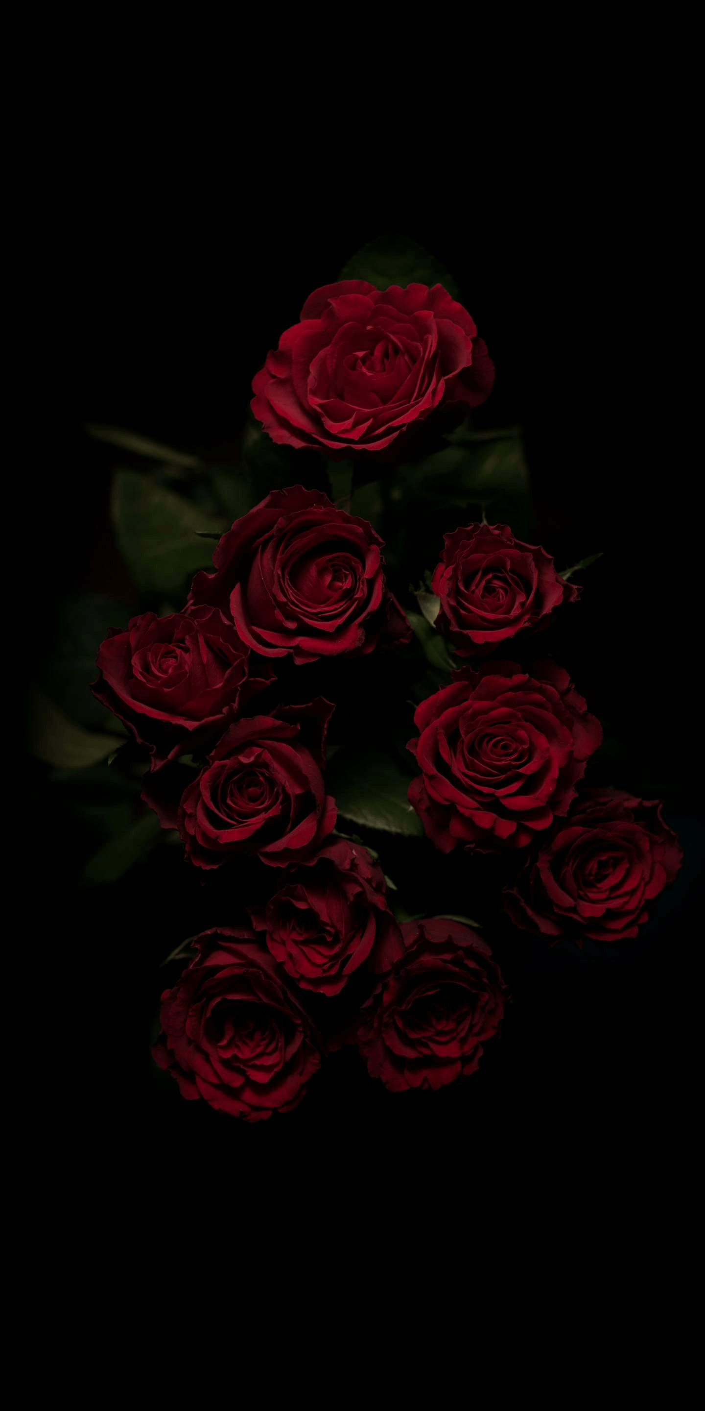 Aesthetic Edgy Aesthetic Dead Rose Wallpaper