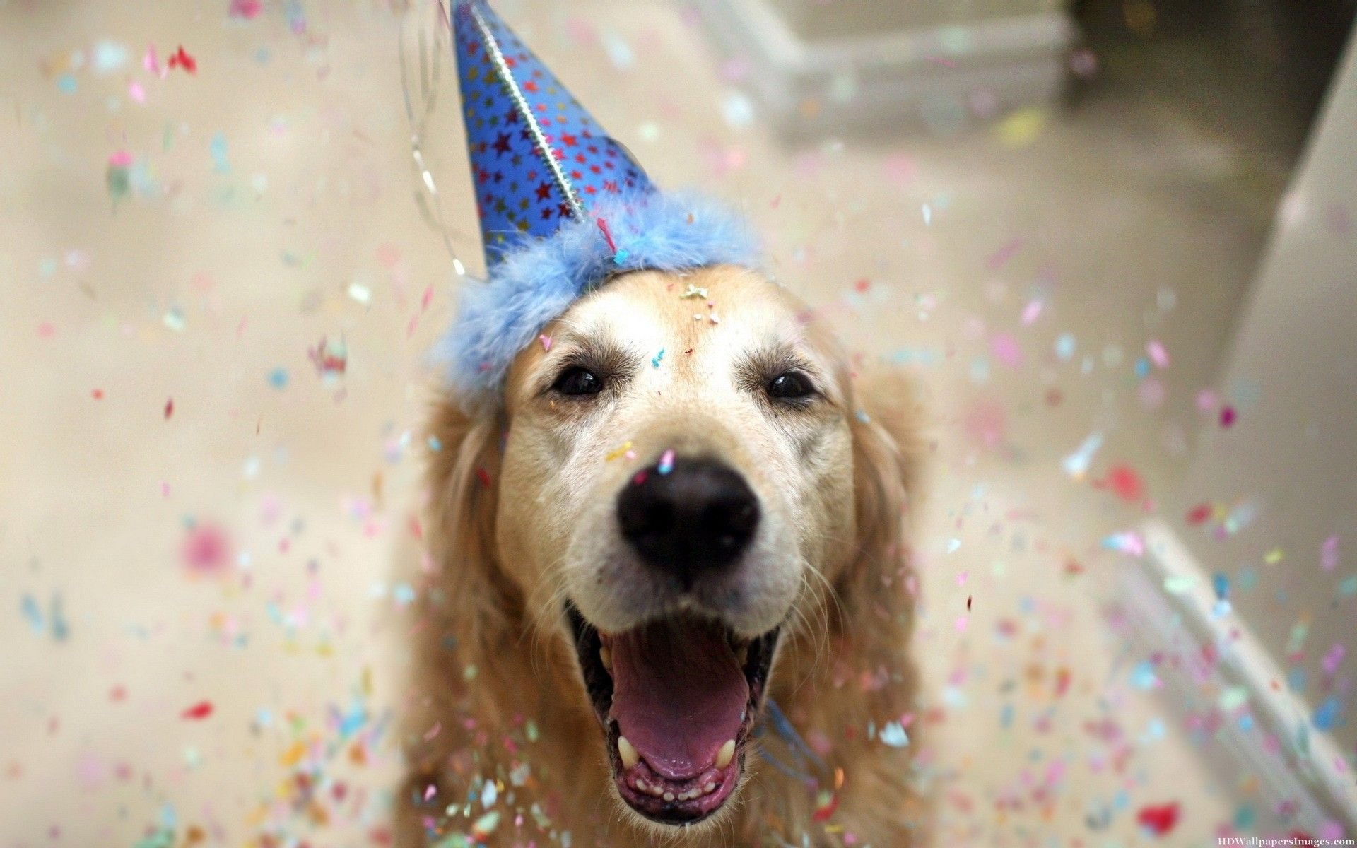 Happy Birthday Dog Wallpapers Top Free Happy Birthday Dog Backgrounds Wallpaperaccess