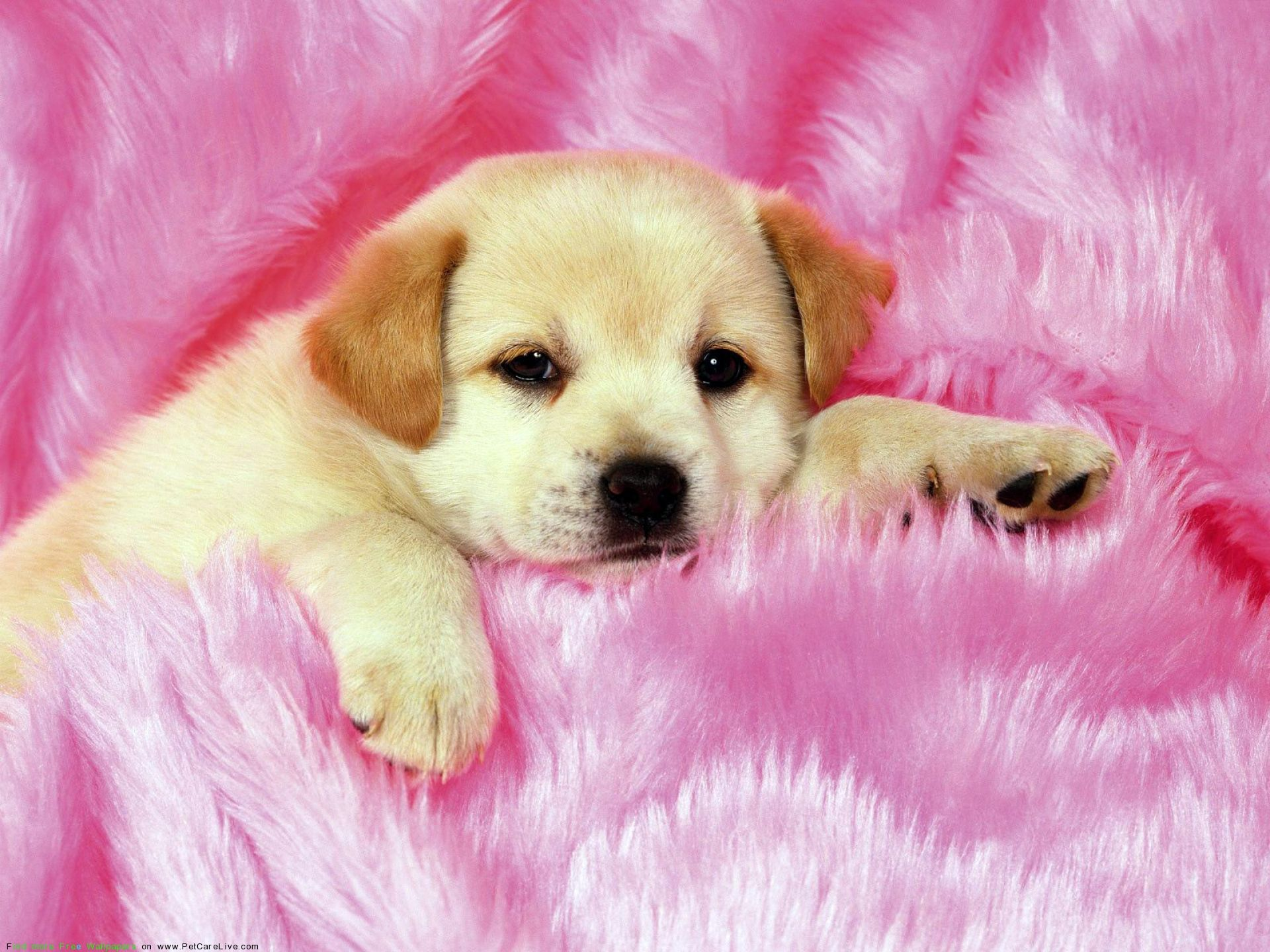 Background Cute Puppy Wallpapers
