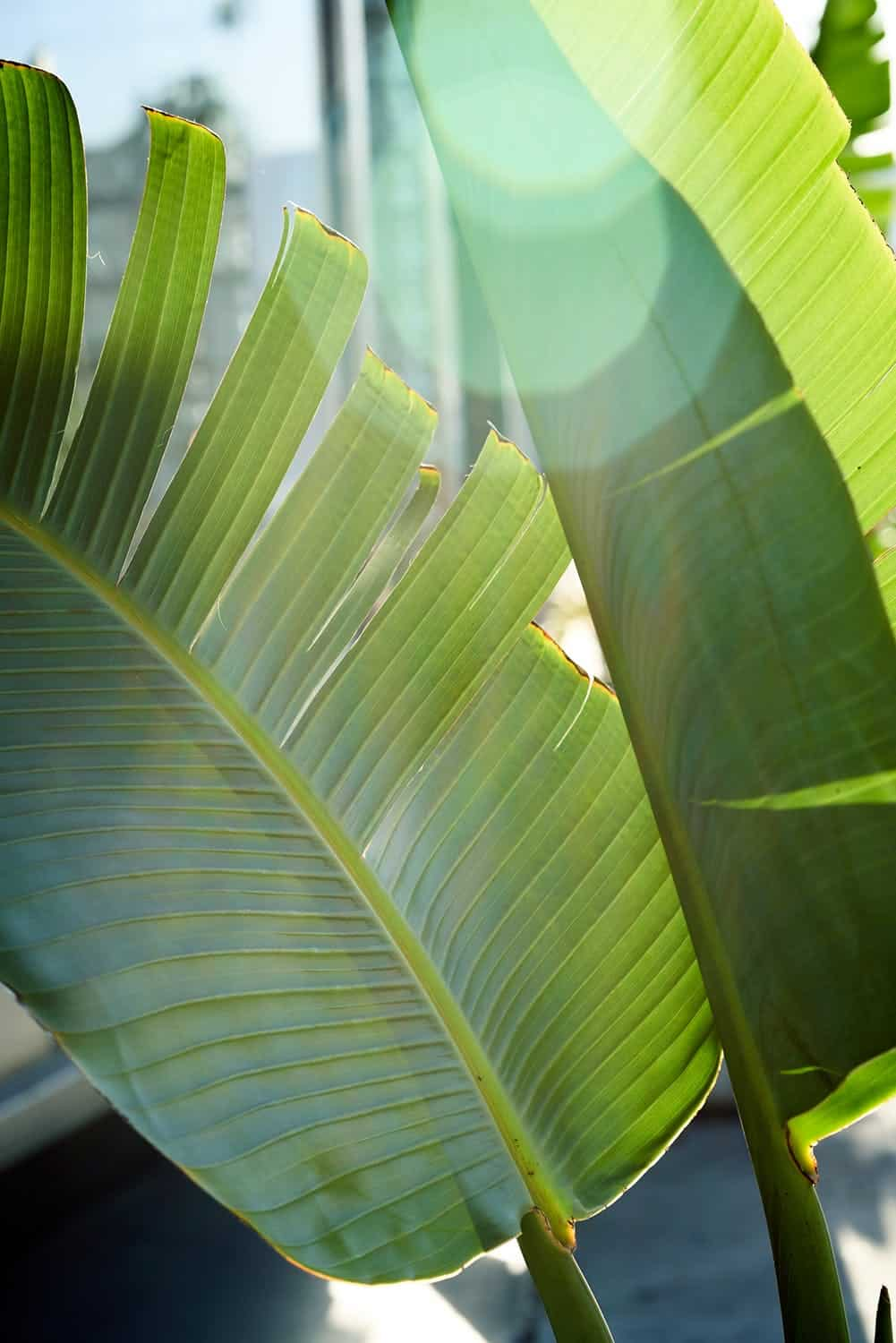 photo reference of palm leaves