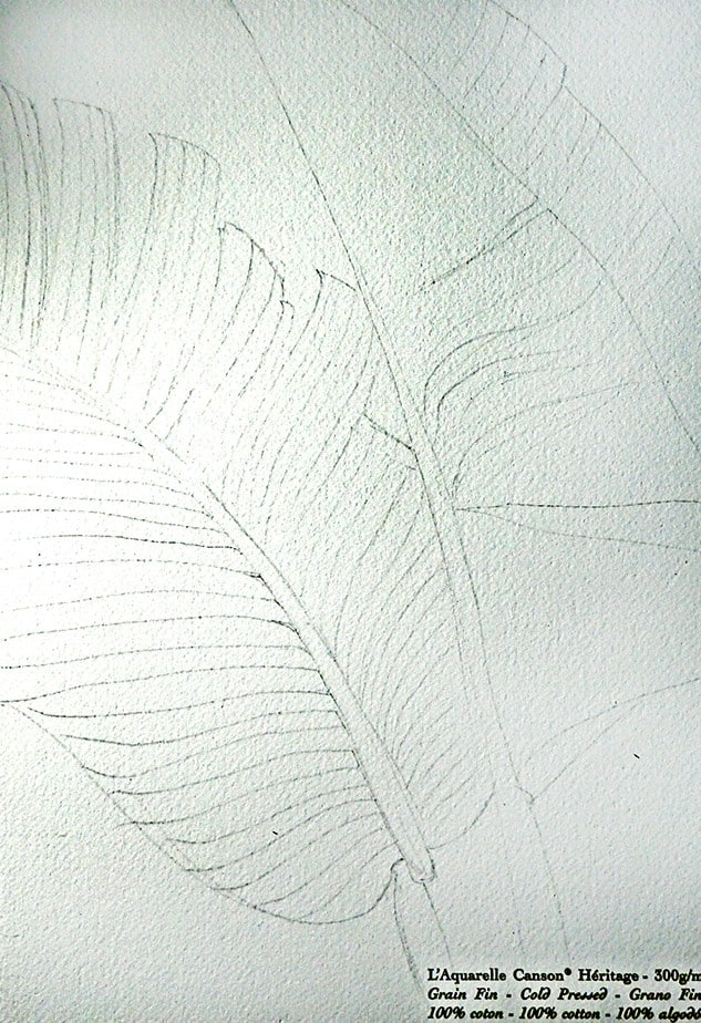 Palm Leaves Sketch Reference