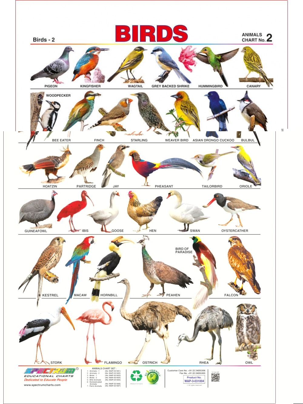 Birds Images With Name