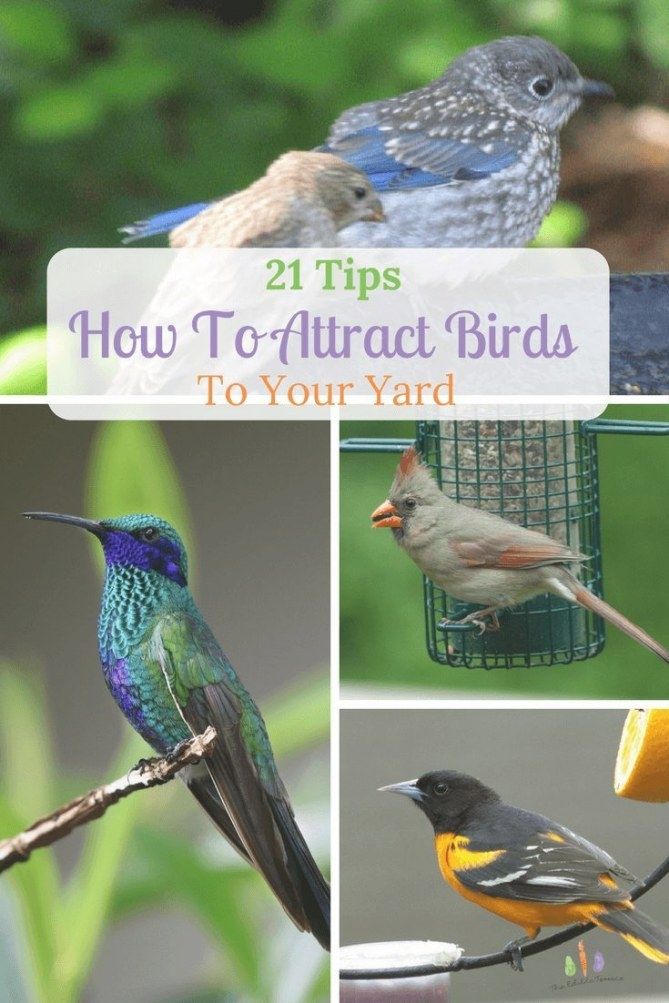 21 Quick Tips For Attracting Birds To Your Yard Or Garden within How To Attract Crows