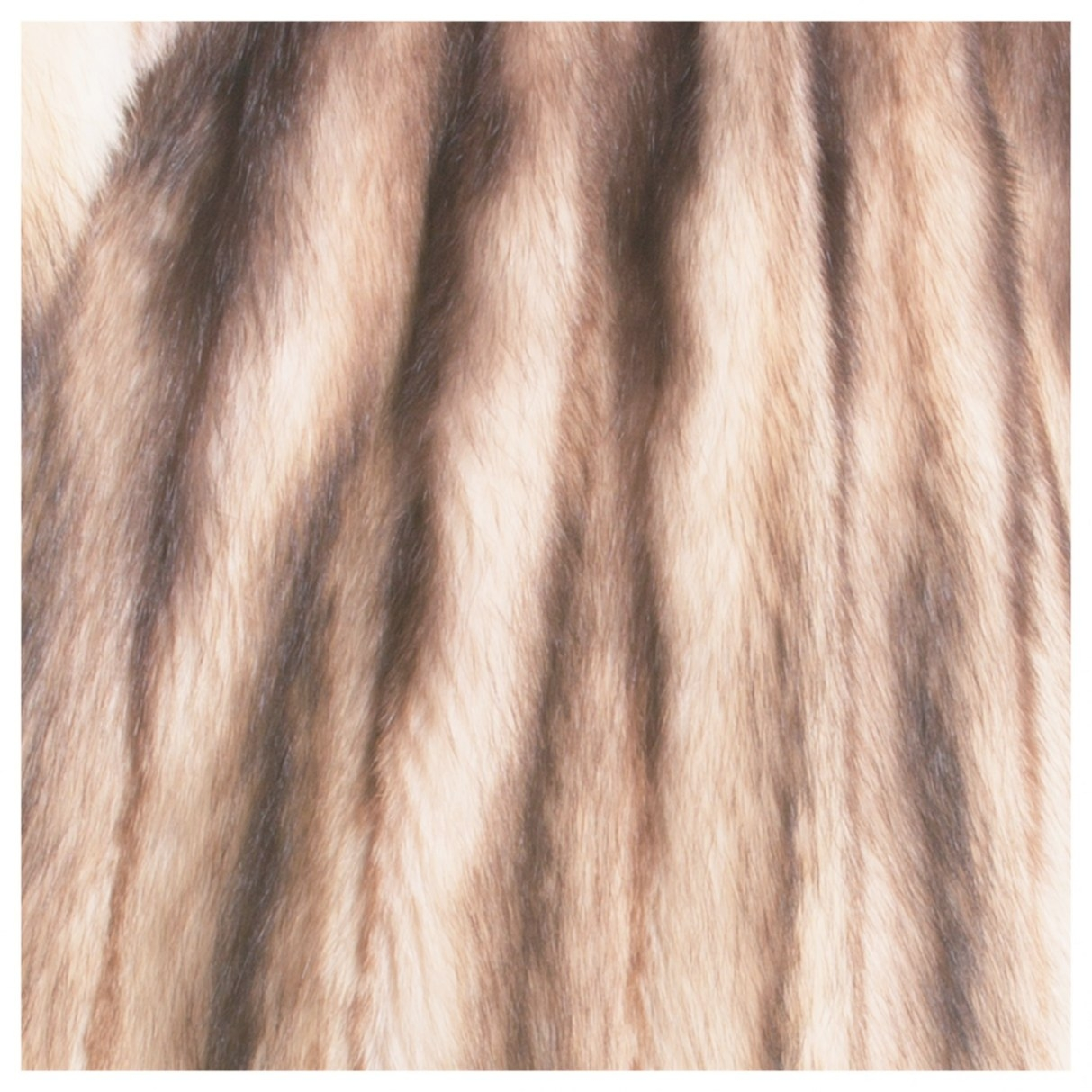 Buy Polecat Fur Jacket Shade Light Brown In A Sable Color throughout What Color Is Sable