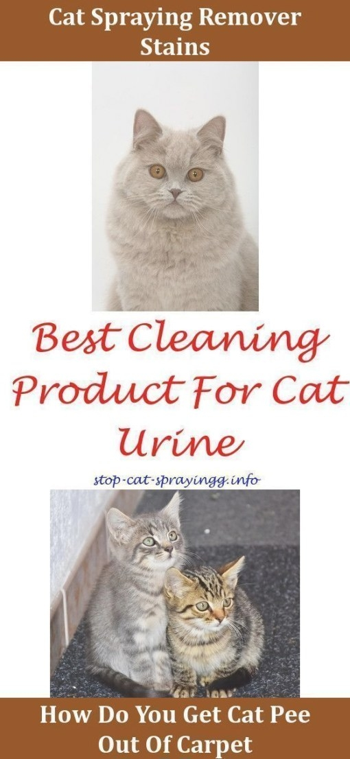 Cat Urine Cleanses Cat Toilet Training Cleaning Cat Pee pertaining to How To Get Urine Smell Out Of Clothes