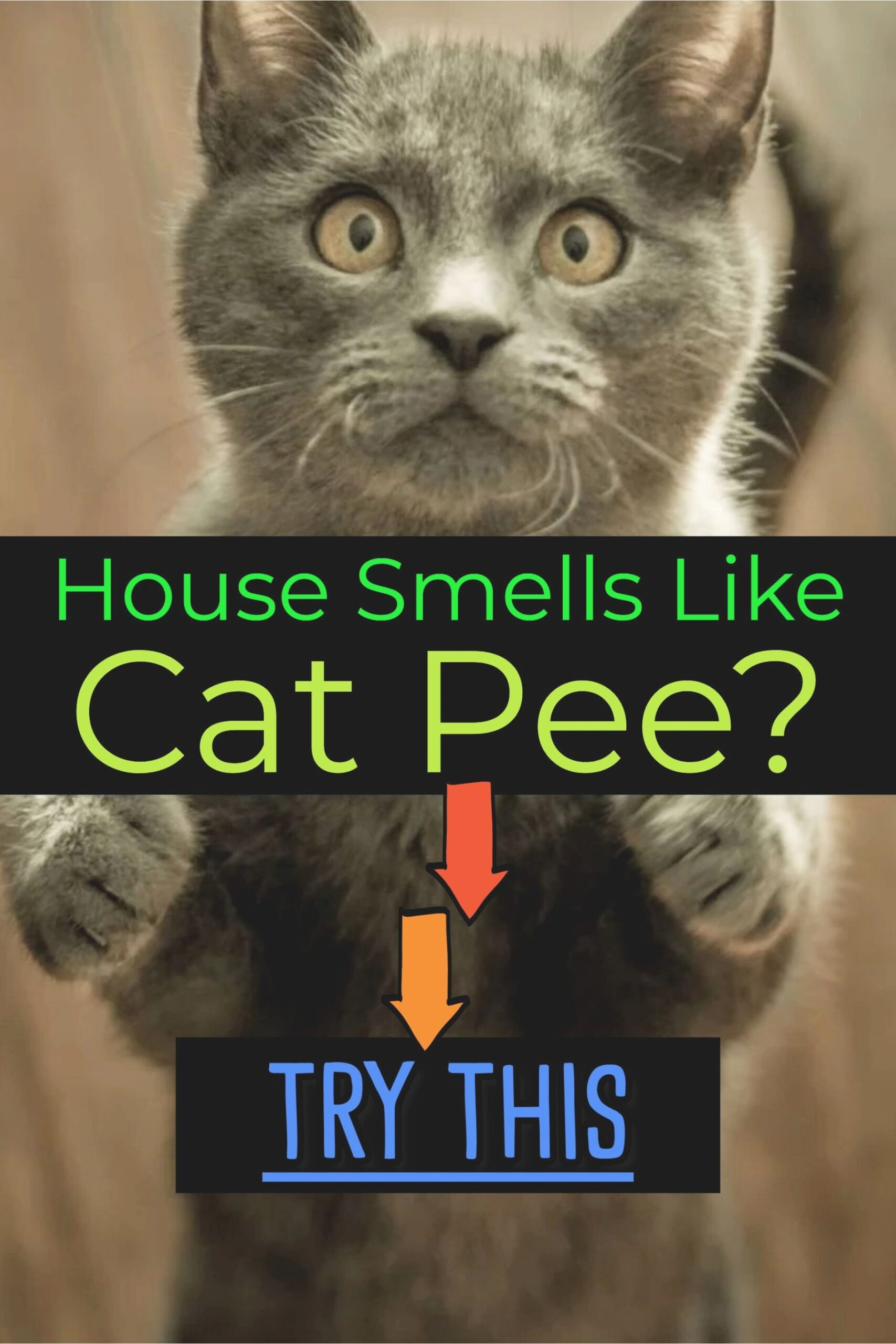 Cat Urine Stink? How To Get Rid Of Cat Pee Smell | Cat Pee throughout How To Get Urine Smell Out Of Clothes