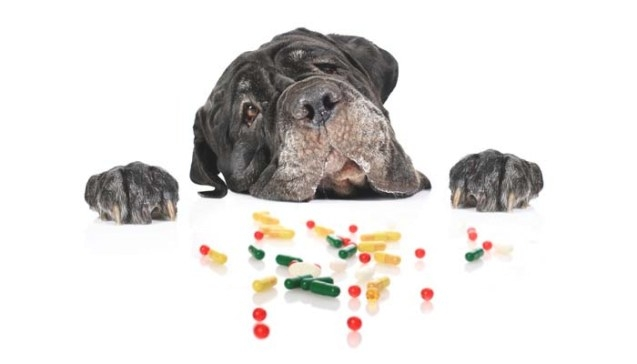 Demodectic Mange In Dogs: Everything Owners Need To Know with Ivermectin Dosage For Dogs