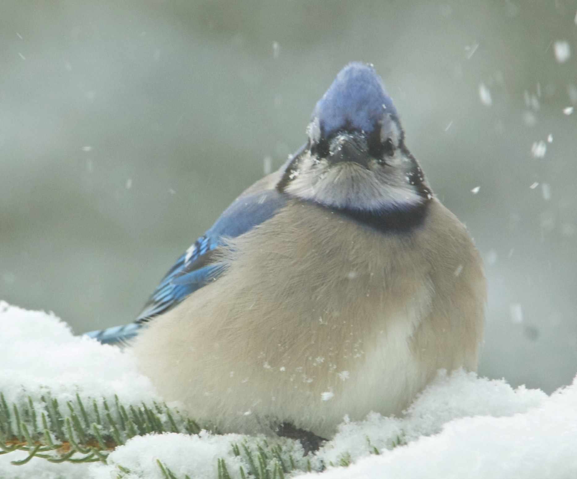 How To Attract Birds In The Winter | Hello Homestead pertaining to How To Attract Crows