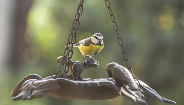 How To Attract Interesting Birds To Your Garden | Diy Garden throughout How To Attract Crows