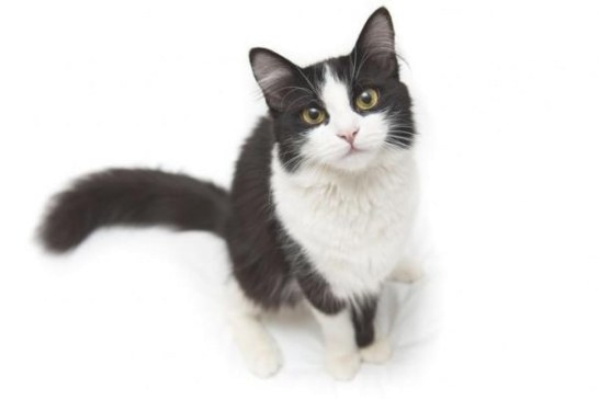 Ivermectin For Cats - Dosage And Uses intended for Ivermectin Dosage For Dogs