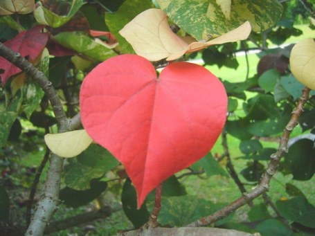 My Gratitude To You - Abundance Life Coach For Women regarding Tree With Heart Shaped Leaves