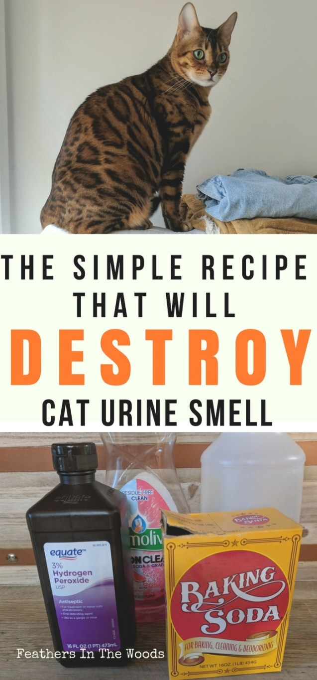 Remove Cat Pee Smell Permanently - Feathers In The Woods with regard to How To Get Urine Smell Out Of Clothes
